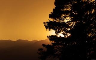 солнце, сквозь ветки, горы, горизонт, хвоя