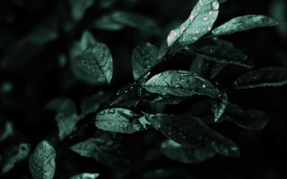 после дождя, мокрая листва, насыщенный зеленый