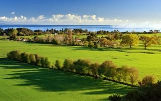 зеленые луга, пейзаж, природа