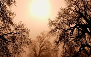 большое солнце, дымка, извилистые деревья