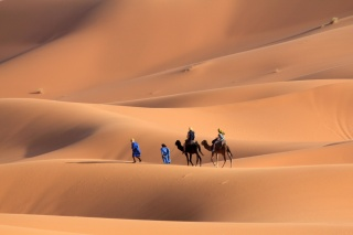desert, the dunes, Wanderers, camels, heat, hurry, to the oasis
