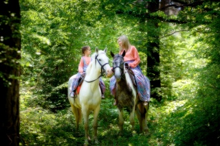 forest, rider, woman, girl, horses, mood, smile
