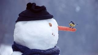 nature, snowman, Tit, birds of the world