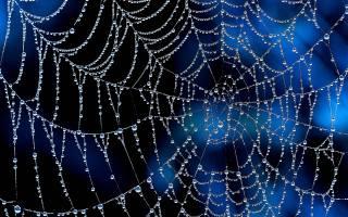 web, Rosa, drops
