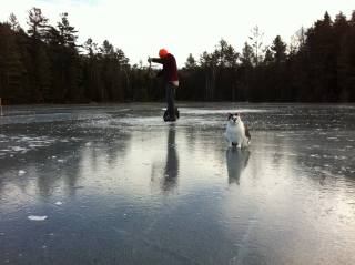 рыбалка, озеро, кот, кабан, зима, лед