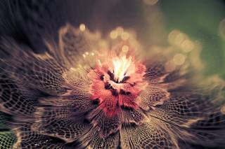 fractals, abstraction, flower, bokeh