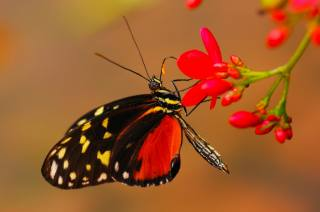 macro photo, butterfly, nature, flowers
