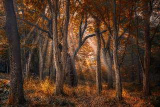 nature, autumn, trees, forest, rays