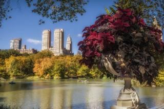 Peter Darcy, США, місто, Нью Йорк, парк, будівлі, вдома, озеро, природа, рослини
