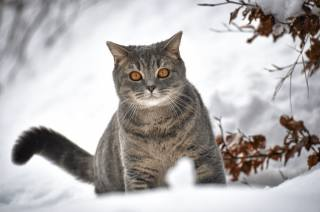 Животное, кот, кошка, взгляд, зима, снег, ветки