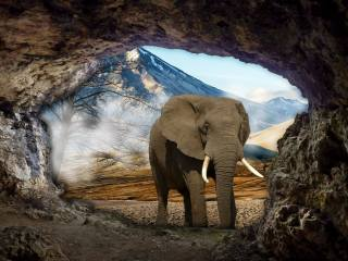 cave, elephant, landscape, photomanipulation