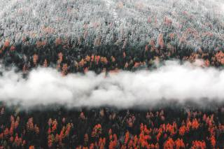 forest, clouds, autumn