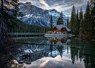 Yoho, National Park, spruce, nature, Canada