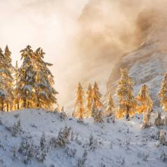 nature, winter, mountains, snow, trees, ate, fog