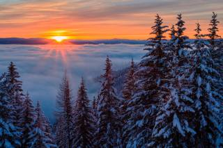 nature, winter, snow, trees, ate, dawn, the sun, rays, fog, clouds