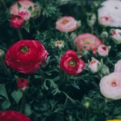 nature, summer, flowers
