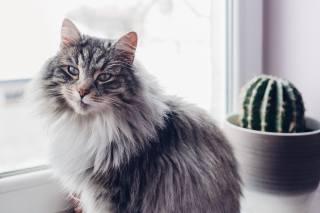 интерьер, Предметы, кошки, кактус