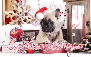 New year, 2018, gifts, dog, holiday