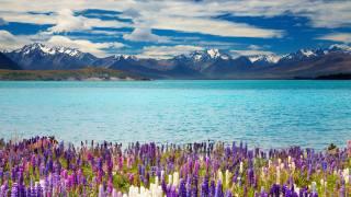 the lake, Tekapo, new Zealand, Lake Tekapo, new zealand, nature
