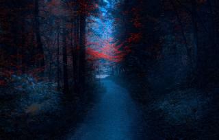 лес - Зобык, Бановичи, Босния, Mevludin Sejmenovic