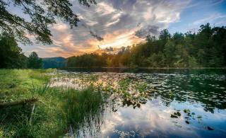 лето, речка, природа, лес