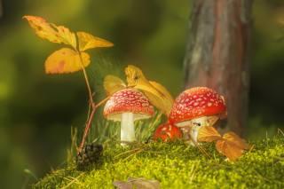 Spidey, autumn, mushrooms, bump, web, leaves, moss, toadstools, nature, Vlad Vladilenoff, ants, macro