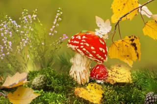 autumn, mushrooms, grass, клоп, leaves, moss, cones, nature, toadstools, Vlad Vladilenoff, branch, macro