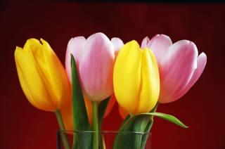 ваза, квіти, тюльпани