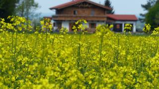 rape, field, the house, bokeh, spring