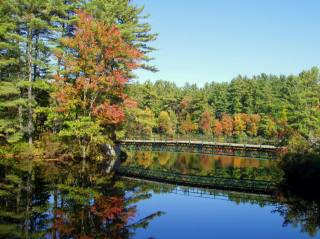 the pond, reflection, trees, autumn