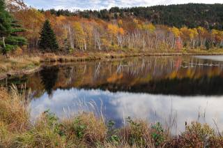 the lake, reflection, trees, autumn
