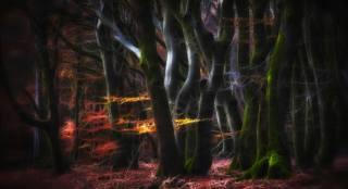 Дремучий таинственный лес, обои для рабочего стола