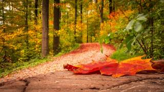 nature, autumn, Park, Alley, trees, track, sheet