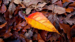texture, leaves, autumn, macro