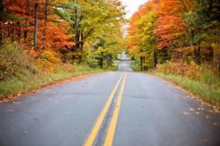trees, paint, road, autumn