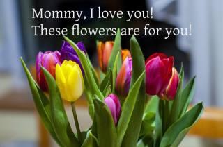 тюльпани, 8 березня, привітання