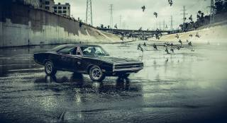 dodge, Charger, pigeons