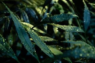 leaves, water, drops, macro