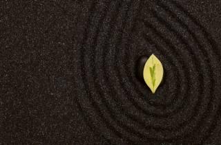 sand, stones, leaf