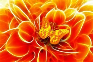 butterfly, Golden, flower