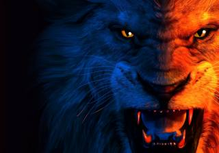lion, lion, predator, art, the dark background