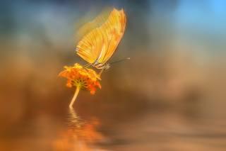 flower, butterfly, macro, water