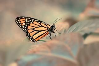 macro, leaves, butterfly