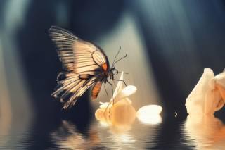 macro, butterfly, flowers, water, light