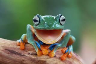 frog, minimalism, macro photo