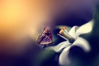 Eleonora Di Primo, macro, flower, pistil, stamens, butterfly