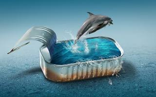 dolphins, pool, canned, water, photomanipulation