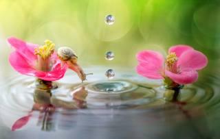 Roberto Aldrovandi, природа, макро, вода, краплі, квіти, Равлик, боке