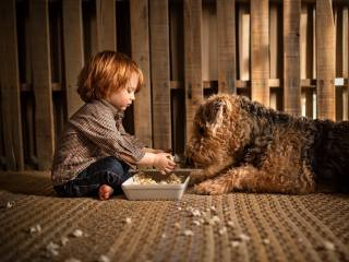 child, boy, baby, dog, dog, Animal, поп-корн