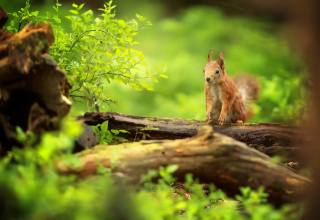 Animal, animal, rodent, Squirrel, nature, summer, driftwood, foliage, branches